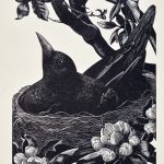 Clare Leighton wood engraving Blackbird on Nest ca. 1934